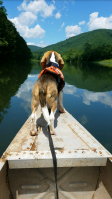 Padfoot Canoing